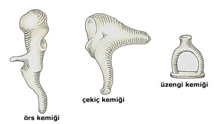 Otoskleroz - Op. Dr. Erkan Aktan